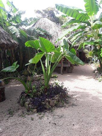 La Pina: tropical plants