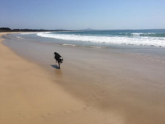Scotts Head Beach: Off leash beach at Scotts Head