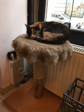 Cat Cafe: A snoozy resident
