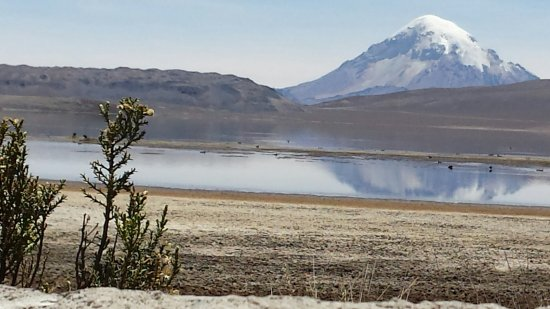 Lauca National Park, Chile: Lauca volcano, behind the Parinacota