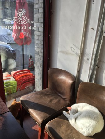 Cafe Confucius: Coffee & cats