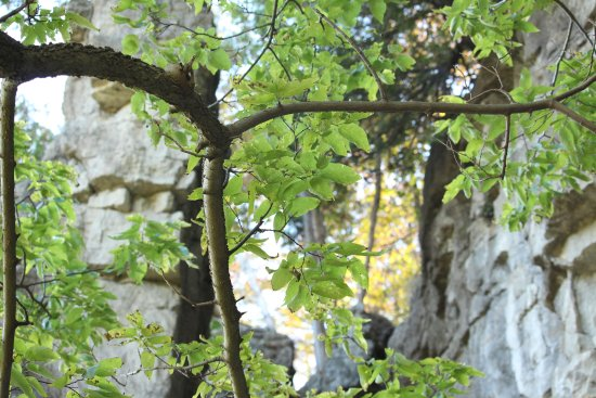 Rattlesnake Point Conservation Area: Escarpment face and foliage at Rattlesnake Point
