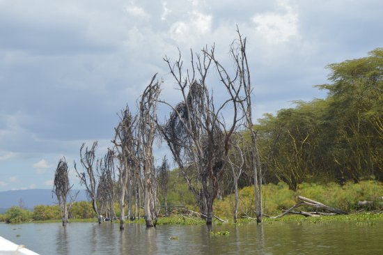 Rift Valley Province, Kenya: shores of lake Naivasha during a boat ride tour