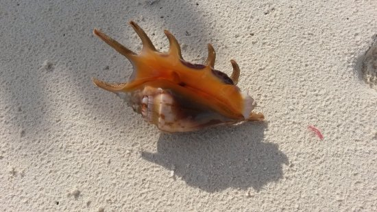 Fihalhohi Island Resort: Сокровища океана