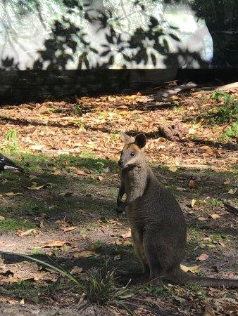 David Fleay Wildlife Park: Parque