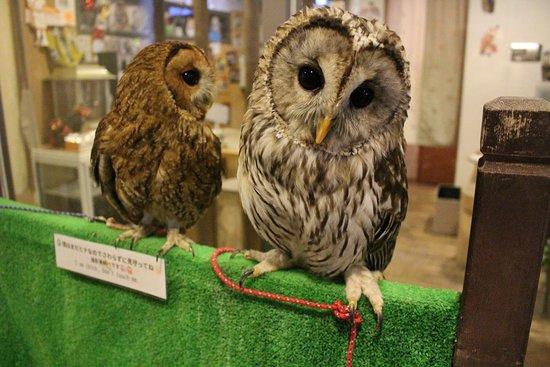 Owl Cafe & Bar Owl Village Kichijoji: 新しい仲間が増えました☆