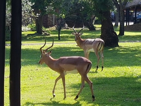 Kruger Park Lodge : 20171219_082928_large.jpg