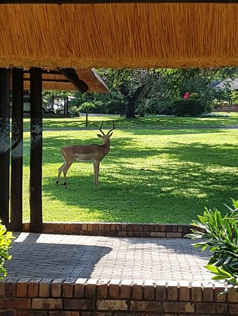 Kruger Park Lodge: 20171219_082820_large.jpg