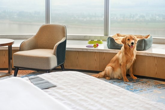 Le Meridien Xi'an Chanba: Pet friendly rooms