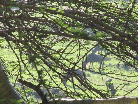 Lobo Wildlife Lodge: Les animaux s'ébattent librement tout autour de l'hôtel