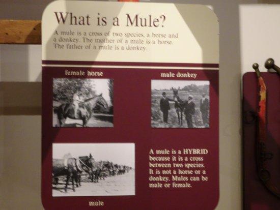 Plantation Agriculture Museum: mule sign