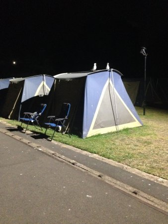 Cockatoo Island Camping: Tenting on cockatoo
