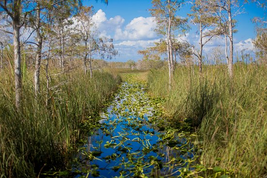 Down South Airboat Tours: Airboat trip