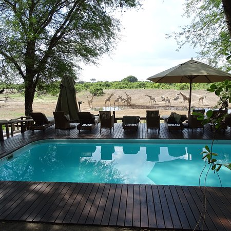 Savute Safari Lodge: photo0.jpg