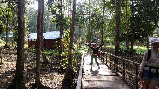 Endau-Rompin National Park: begining of track