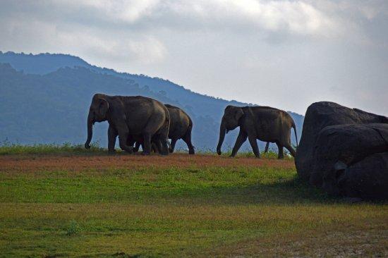 Chauffeur.lk: éléphant dans goal oya national parc