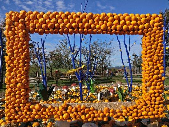 Pumpkin Festival @Jucker Farms