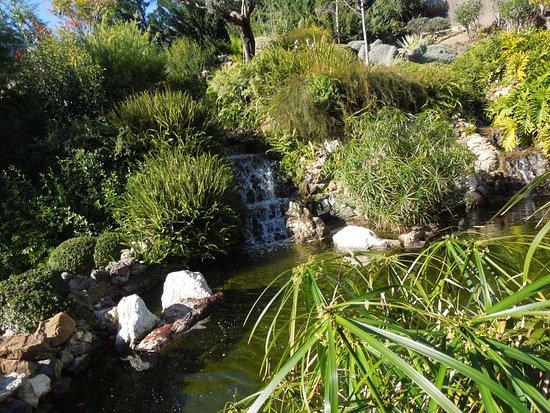 Foto de jard n bot nico molino de inca torremolinos for Jardin botanico tarifas