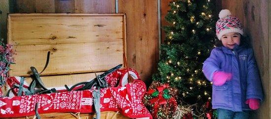 Charmingfare Farm : Scenic tree display in Reindeer barn