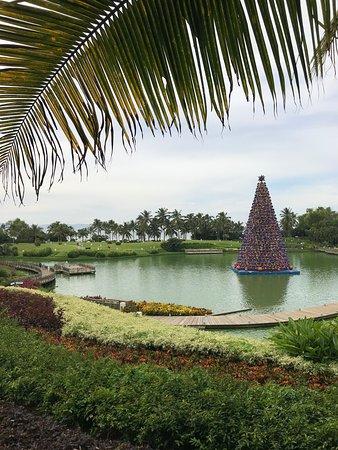 Paradise on December