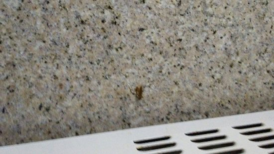 Hawthorn Suites by Wyndham Charleston: Beware Cockroaches! My husband killed this not even 30 minutes in the room.