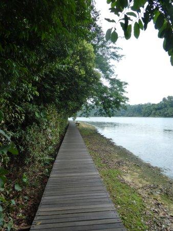 MacRitchie Reservoir: Boardwalk