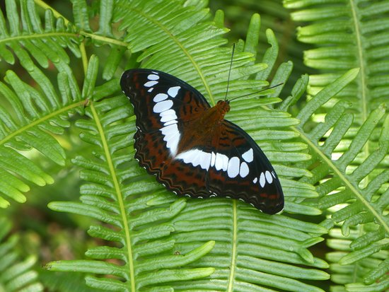 MacRitchie Reservoir: Butterfly