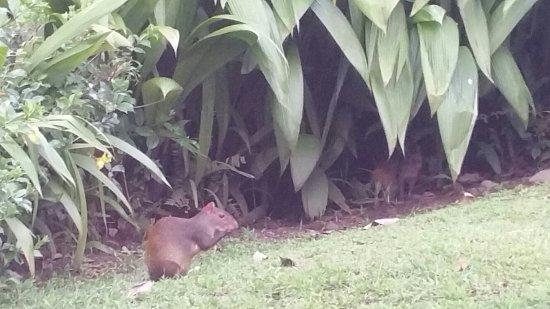 Sí Como No Resort & Wildlife Refuge照片