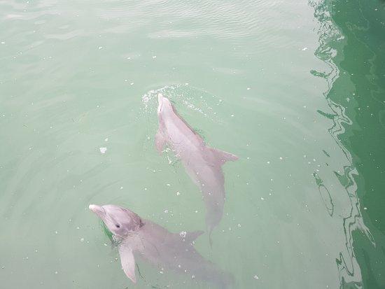 Delfinario en Cayo Santa Maria: bellos