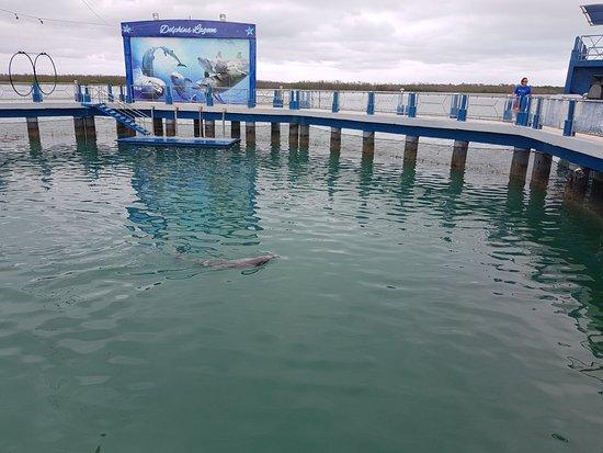 Delfinario en Cayo Santa Maria: delfinario