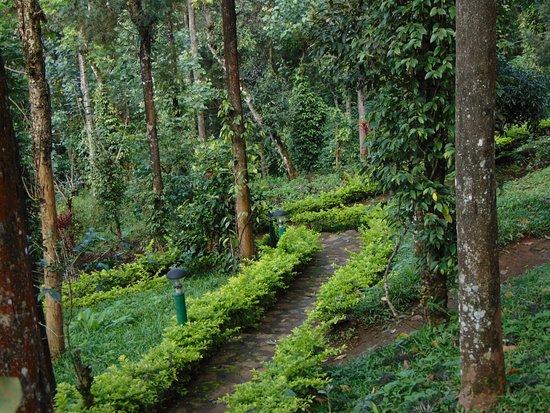 Munnar Flower garden