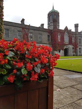 National University of Ireland-Galway (UCG) : Red-flower_large.jpg