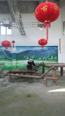 Suzhou Taihu Wetland Park: パンダです。