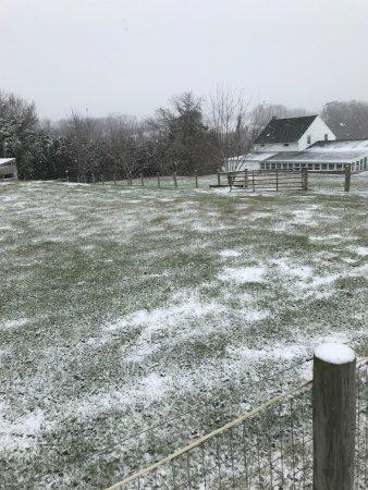 Star Gait Training: Snowy scape in Lititz Pennsylvania along the trail