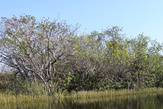 Airboat In Everglades : Airboat turen