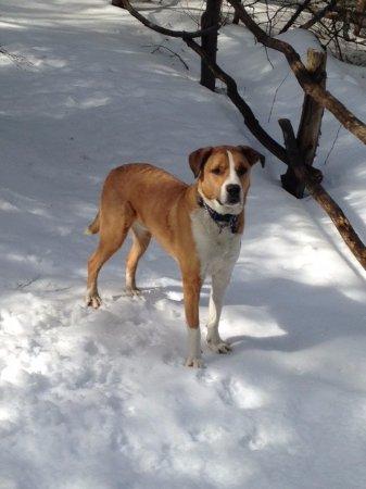 Sandwich, นิวแฮมป์เชียร์: Dog fun at Beede Falls