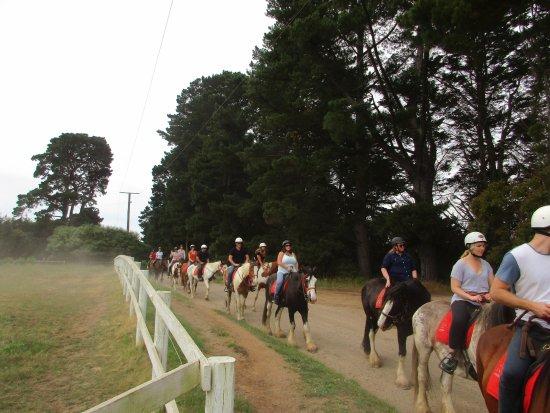 Horseback Winery Tours: Riding along a back road