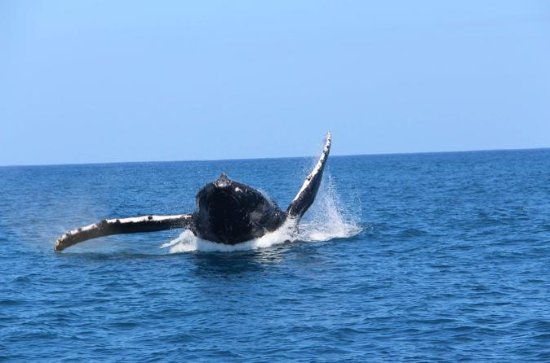 Half-Day Narrated Whale Watch Tour...