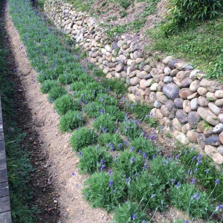 Lavender Cottage Jianshi Photo
