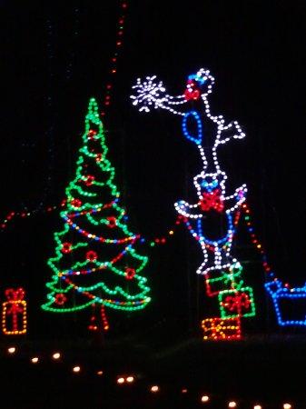 Tilles Park Christmas Lights.Decorating The Christmas Tree Picture Of Tilles Park