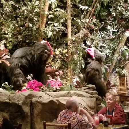 Rainforest Cafe Photo