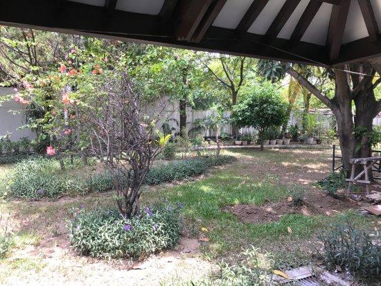 Bahari Inn: Garden outside the room window