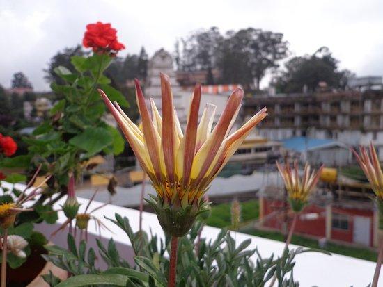 Garden Manor: rooftop garden