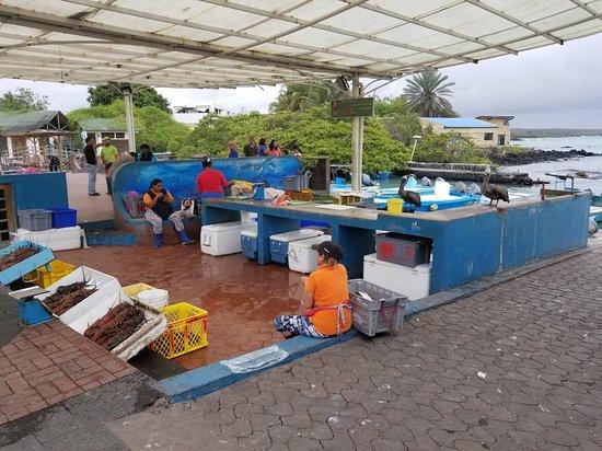 20171221 163616 picture of santa cruz fish for Santa cruz fishing spots