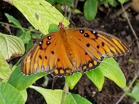 Florida Native Butterfly Society