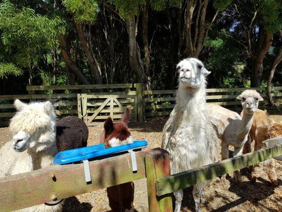Close Encounters Farm Experience