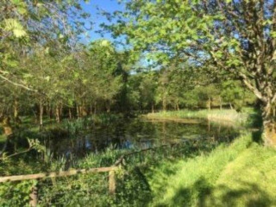 Llanbrynmair, UK: Our wildlife pond