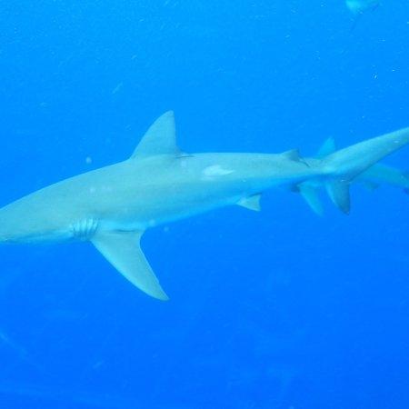 Oahu Shark Tour Reviews