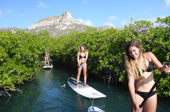 Guided paddleboarding (SUP) mangrove...