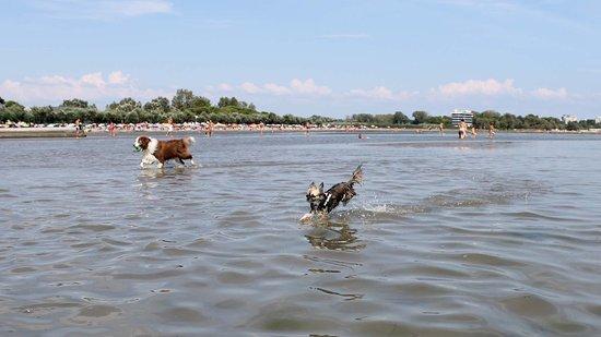 """GRADO - a fizetős strandok utánni """"szabad strand"""", ahol a kutyád is fürödhet"""